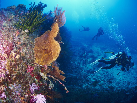 seafan: divers with giant fan coral in Similan, Thailand