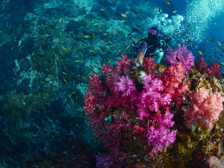 seafan: diver with giant fan coral and reef fish in Similan, Thailand