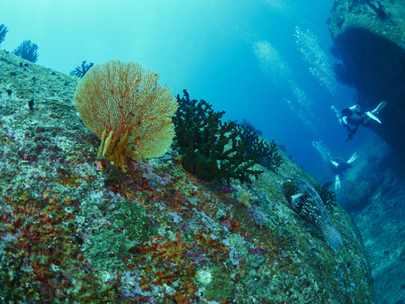 parrotfish: parrotfish and reef coral in the deep sea with diver Stock Photo