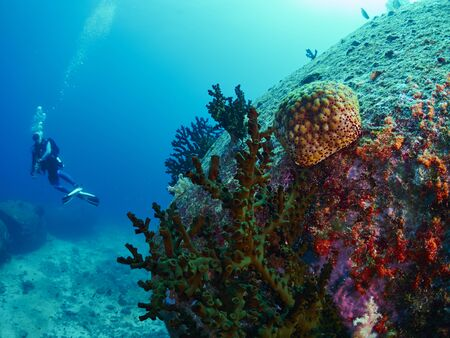 sealive: Shooting Cushion Star in the coral reef with diver