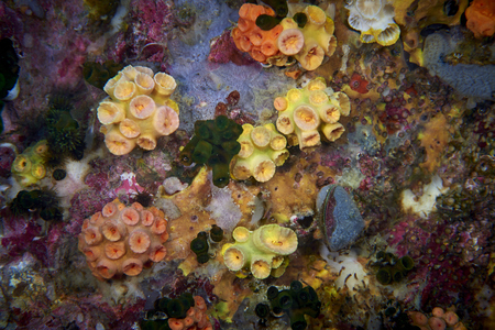 hard coral: Extreme close-up of the colorful polyps from a hard coral.