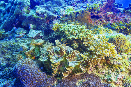 reef fish: reef coral and reef fish at Chomphon, Thailand Stock Photo
