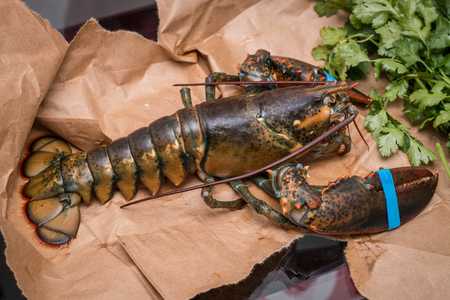 Fresh raw alive lobster on the table