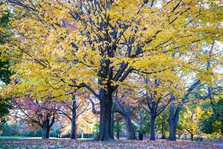Prospect Park in New York City during Autumn Stock Photo