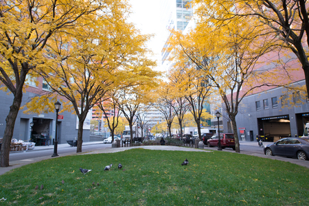 New York City, Battery Park area. Beautiful view of Trees  on a sunny day. Editorial