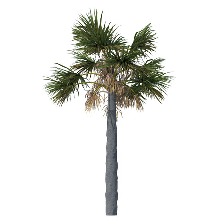 3D palm on white background. 3D render photo.