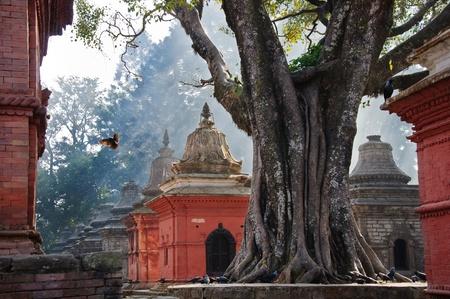 animal ritual: A bird in the sunshine in Hinduist temple