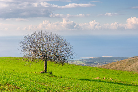 beautiful landscape and lone tree