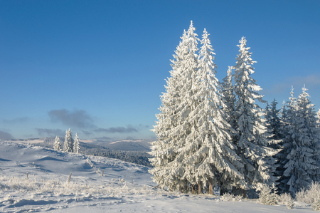 Winter landscape in mountains with  fir trees