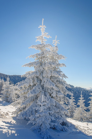 Fir tree and snow on blu sky background Stock Photo