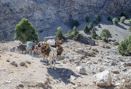 wild donkey: Donkey caravan in mountains of Tajikistan