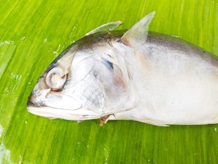 mackerel  on banana leaf photo