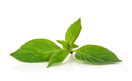 thai basil: Thai basil leaf on a white background Stock Photo