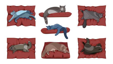 set of sleeping cats on white background