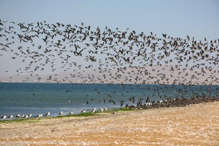 seabirds: Seabirds Stock Photo