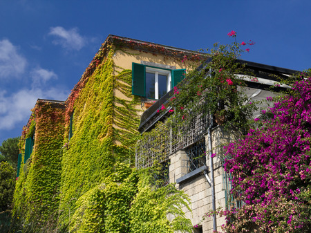 Walls of house in Naples covered with colored leaves and flowers, blue sky background, sunny day.