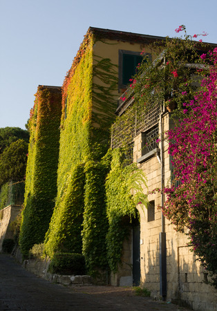 Walls of house in Naples covered with colored leaves lit by sunshine.