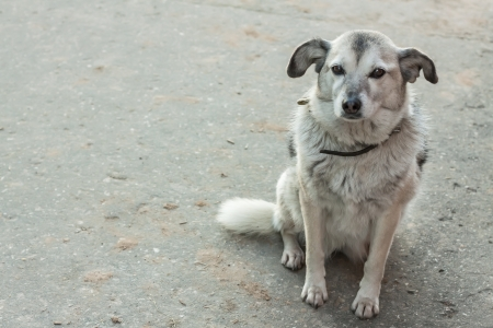 sagacious: The sad lonely homeless dog waiting Stock Photo