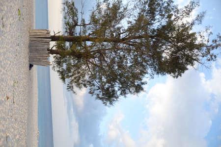 Single pine tree, calm blue sea and white sand on the Kita beach Mananga Aba, Southwest Sumba, Indonesia.