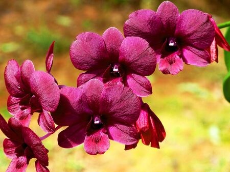 The color of hybrid orchid flower photo
