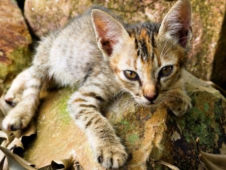 mixed-breed gray kitten lying on stone  outdoor garden