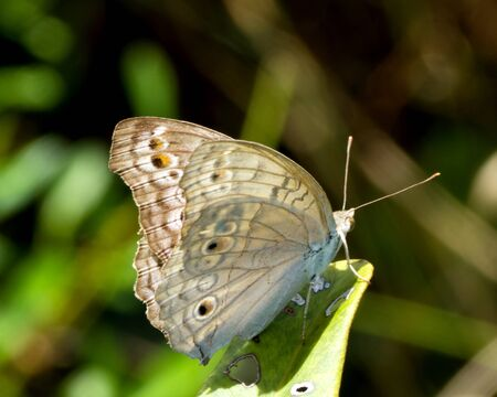 Butterfly rests on a blade of grass near a pool