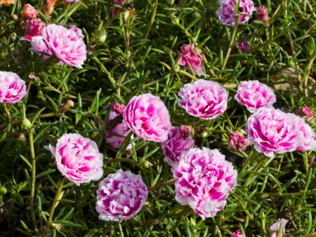 Pink flower in green garden