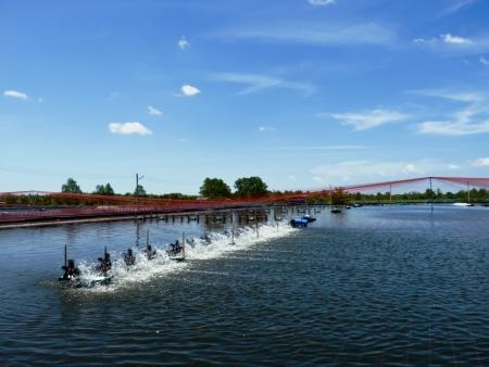 gamba: En los camarones del estanque en el aireador por la ma�ana rueda de paletas se est�n ejecutando Foto de archivo