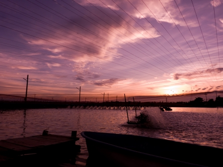 In evening sunset time at shrimps pond  paddle wheel aerator are running photo