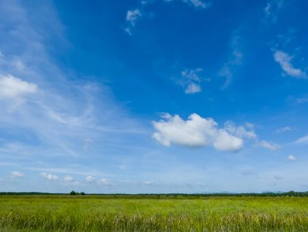 Green field and blue sky-nature background Stock Photo - 14558013