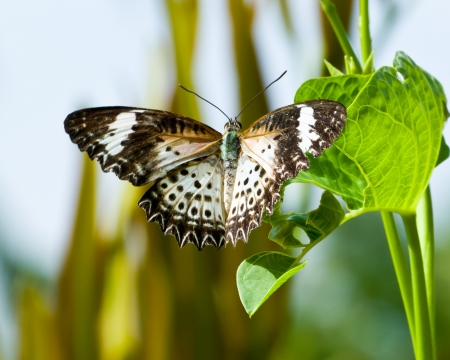 Butterfly rests on a blade of grass near a pool Stock Photo - 14643819