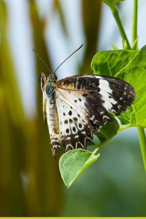 Butterfly rests on a blade of grass near a pool Stock Photo - 14643824