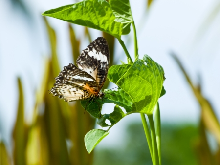 Butterfly rests on a blade of grass near a pool photo