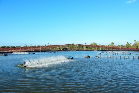 shrimp farm with paddle wheel aerator under blue sky