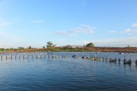 shrimp farm with paddle wheel aerator under blue sky