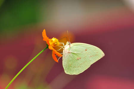 The yellow flower and the butterfly Stock Photo