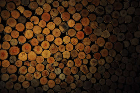 The log Stock Photo