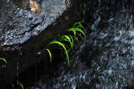small plant in the waterfall