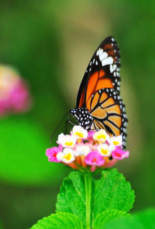 flower and butterfly Stock Photo