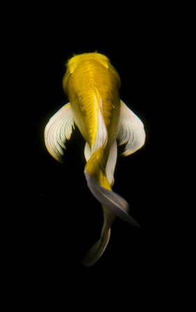 Fish Stock Photo - 7378461