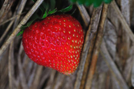 Strawberry Stock Photo - 8602294
