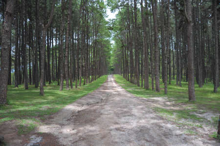 Road to the forrest