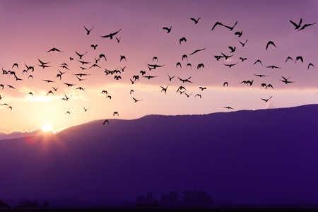 purple sunset: Flock of Birds Flying at the Sunset above Mountian in Golan Heights (North of Israel)
