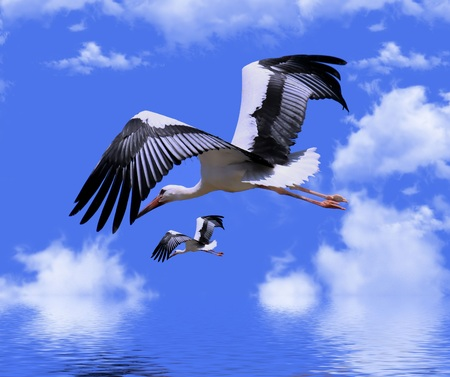 Two storks on the background of the sky with clouds Imagens