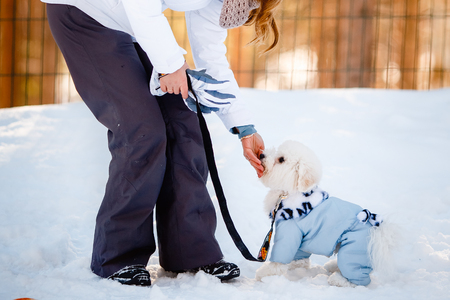 sitter: Bichon-Frize dog on the street is practicing with the dog sitter in the clothes for dogs, kombenizon, winter sunset aviary. Cynologist