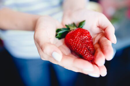 girl holds a large strawberry from the garden on her palms. Strawberry with green leaves. Concept in the hands of vitamins.