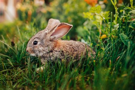 Little rabbit on the grass farm of pets.