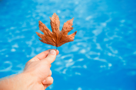 Hand of cleaner holds fall leaves on background swimming pool blue water. concept pool cleaning Imagens - 86444127