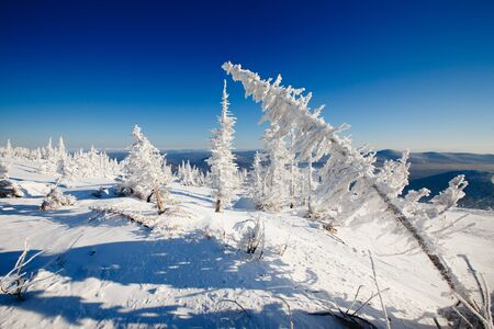 Winter landscape. Trees ate in the snow and frost. Blue sky, mountains.