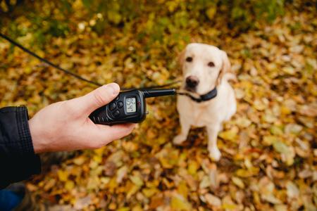 Hond met elektrische schokkraag op buiten. Stockfoto